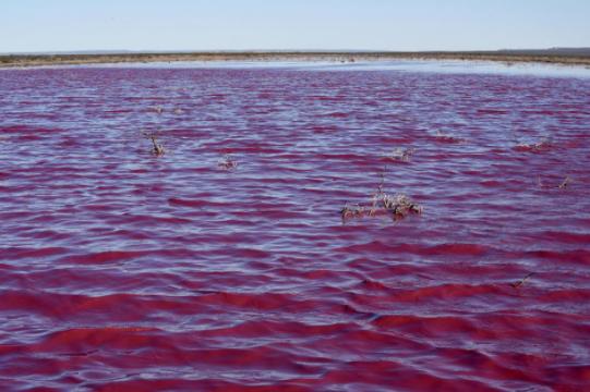Liqeni në këtë vend ka marrë ngjyrë rozë/ Banorët zënë kokën  me dorë: Ua si na ndodhi kjo