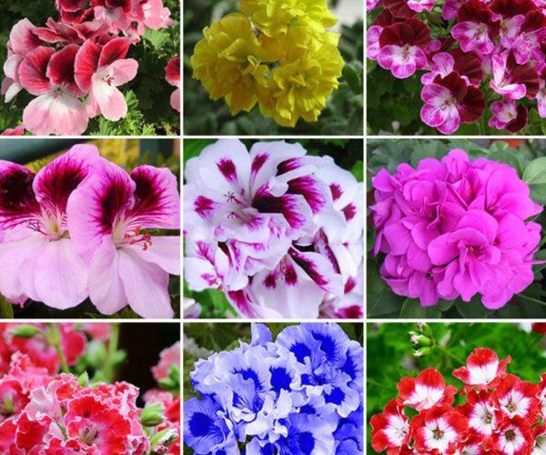 Sjell fat dhe shëndet të madh/ Këtë lule duhet ta mbajnë patjetër shqiptarët në shtëpi: Bën mrekulli